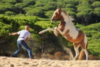 Reiturlaub an der Atlantikküste Andalusiens - Sensitive Horsemanship, gebissloses Reiten uvm.