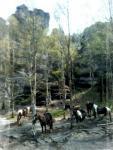 Wanderreiterhof Mohorn Andrea Seidel im Erzgebirge zwischen Tharandter Wald und Triebischtal