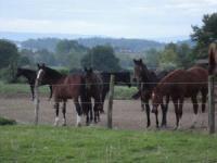 Reiterferien mit oder ohne eigenes Pferd auf Pferdehof in Montpont en Bresse, Südburgund