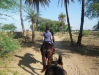 Reiturlaub in Indien, Wanderreiten durch das ländliche Rajasthan auf dem einheimischen Marwari Pferd