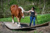 Reiterferien für Pferd und Reiter auf dem Extreme Trail Park in Sennwald, St. Gallen, in der Schweiz