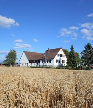 Rosenhof -  Stall Elias in Willstätt / Baden-Württemberg