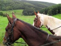 Reiterferien für Erwachsene & Familien auf der River Ranch * Westernreiterhof im Herzen der Südeifel