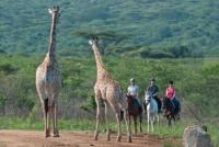 Hotel Pakamisa mit Arabergestüt - Reiten in Pakamisa, Südafrika!