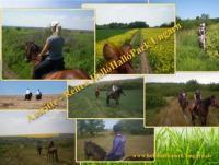 Reiterferien, Ausreiten, Reitunterricht im HelloHalloPark in Ungarn in der Nähe von Budapest