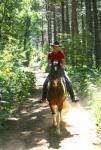 equus-via  - Reiten im schönen Naturpark Hohe Mark / der Haard zwischen Münsterland und Ruhrgebiet