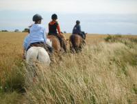 Ferien auf dem Bauernhof - Reiten, Ausritte und Reitunterricht an der Ostsee- Reiturlaub auf Fehmarn