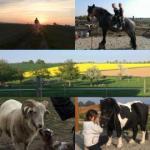 Sinnes Wandel Hof Serka - Urlaub mit meinem Pferd im schönen Muldental