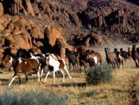 Reiturlaub in Namibia am Rande der Namib Wüste - sowie  Zähmung junger Wildpferde