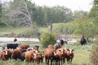 Willkommen auf der Parkland Ranch im wilden Herzen Kanadas!