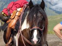 Ranchurlaub in Alberta / Kanada - Western Horsemanship und all-inclusive Ranchurlaub von 3-14 Tagen