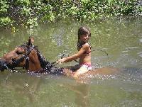 Reitferien im tropischen Teil von Brasilien. Reiten am Strand wie auch im Regenwald für jung und alt