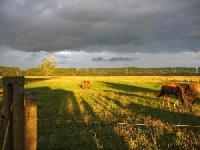 Westernreiten und Ranchurlaub auf der MQ Ranch bei Berlin