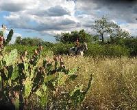 Spirituelle Reitferien im Chaco von Paraguay auf dem Pferdehof Cortijo La Perla