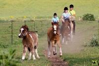 Reit-Ferien im Ponyland.  Reitgut Schloß Niederabsdorf für Anfänger & Fortgeschrittene