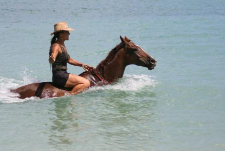 Being with Horses in Buccoo / Tobago