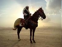 Pferdetrekking in die Tunesische Sahara mit BedouinCavalier Abderrahim ben Abdelmalek