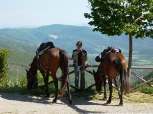 Bild 5 von Weingut & Wanderreitbetrieb