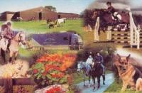 Annaharvey Farm Equestrian Centre & Guesthouse - Reiturlaub in Irland nahe Tullamore!
