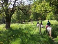 MAS DU SAPIN - Der paradiesische  Camargue-Pferde Reiterhof in den Freibergen.