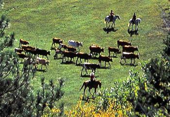 Colorado Trails Ranch in Durango / Colorado