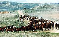 Sombrero Ranches - Reiten in Colorado, USA - ganzjährige Ausritte an verschiedenen Standorten.