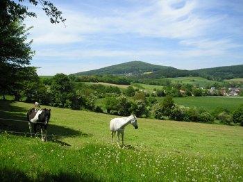 Ferien-/ Urlaubsbetrieb, Pensionsstall / Pferdepension, Reiterhof, Ponyhof, Reiterpension in Hohenroda - Mansbach