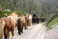 Das Gestüt Nahetal - Islandpferde zum Verlieben!!! Reiturlaub und Reitunterricht im Saarland