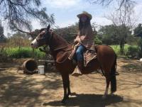 Reiten in Peru auf Paso-Pferden - entdeckt die mysteriöse Welt der Inkas abseits des Massentourismus
