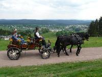 Reitausflüge und Kutschfahrten im Herzen von Thüringen