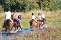 Kande Horse bietet Reiturlaub und Wanderritte in die Wälder