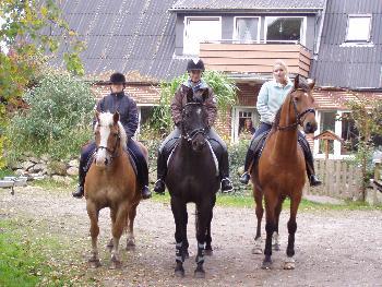 Ferien-/ Urlaubsbetrieb, Pensionsstall / Pferdepension, Bauernhof, Reiterhof, Ponyhof, Kinderferienbetrieb in Sönnebüll bei Husum