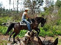 Makin´ Tracks Trail Rides - Reiten in Zentral Florida im Oklawaha River Management