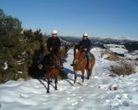 Kate Tapley Horse Treks-Wanderritte und Natural Horsemanship in Christchurch, Neuseeland!