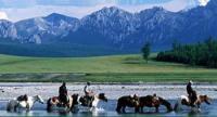 Inspirierende Ausritte mit Pferden durch die Wildnis der Mongolei!