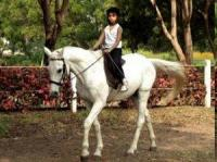 Japalouppe Equestrian Center, Reitschule nahe Pune, Indien!