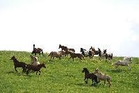 REITZEIT - Reiten, Natur erleben, den Rhythmus der Pferde entdecken auf der schwäbischen Alb