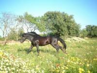 Mallorca  erleben, Reit-Urlaub für Anfänger u. Fortgeschrittene, Geländeausritte, Ponyreiten,Kutsche
