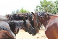Reitsafaris in Nepal - Nirvana´s Horses Resort bietet Reiturlaub und Wanderritte in Nepal