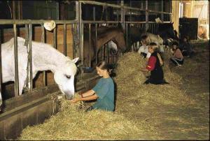 Beim füttern im Stall