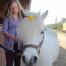 Gastpferde & Ponys Hof Kirchhorst