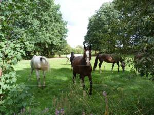 Objektbild Pferde 1
