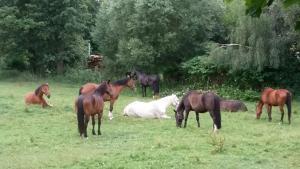 Objektbild Pferde 2
