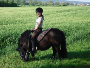 Unsere Pferdefreunde für Groß und Klein
