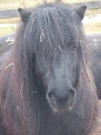 Objektbild Pferde 3