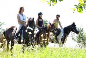 Wanderreiten im fränkischen Dottenheim