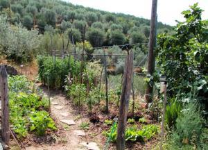 Unser biologischer Gemüsegarten am Haus