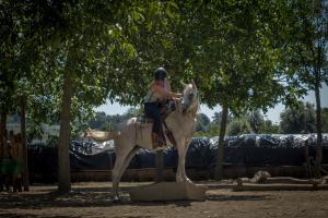Horseman Schule