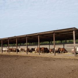 Ausgeglichene Pferde im Offenstall
