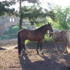 Zufriedene Pferde und Ponys